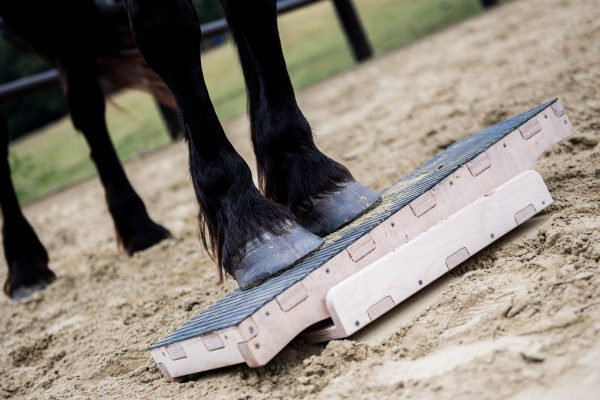 DS-EquiWelt Trailsystem - Wippe 2-Bein